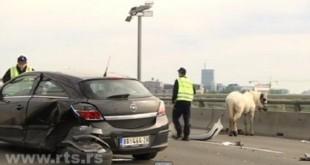 Saobraćajka sa zaprežnim kolima na Beogradskom mostu