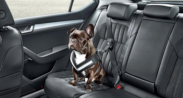 Škoda nudi sigurnosni pojas za pse